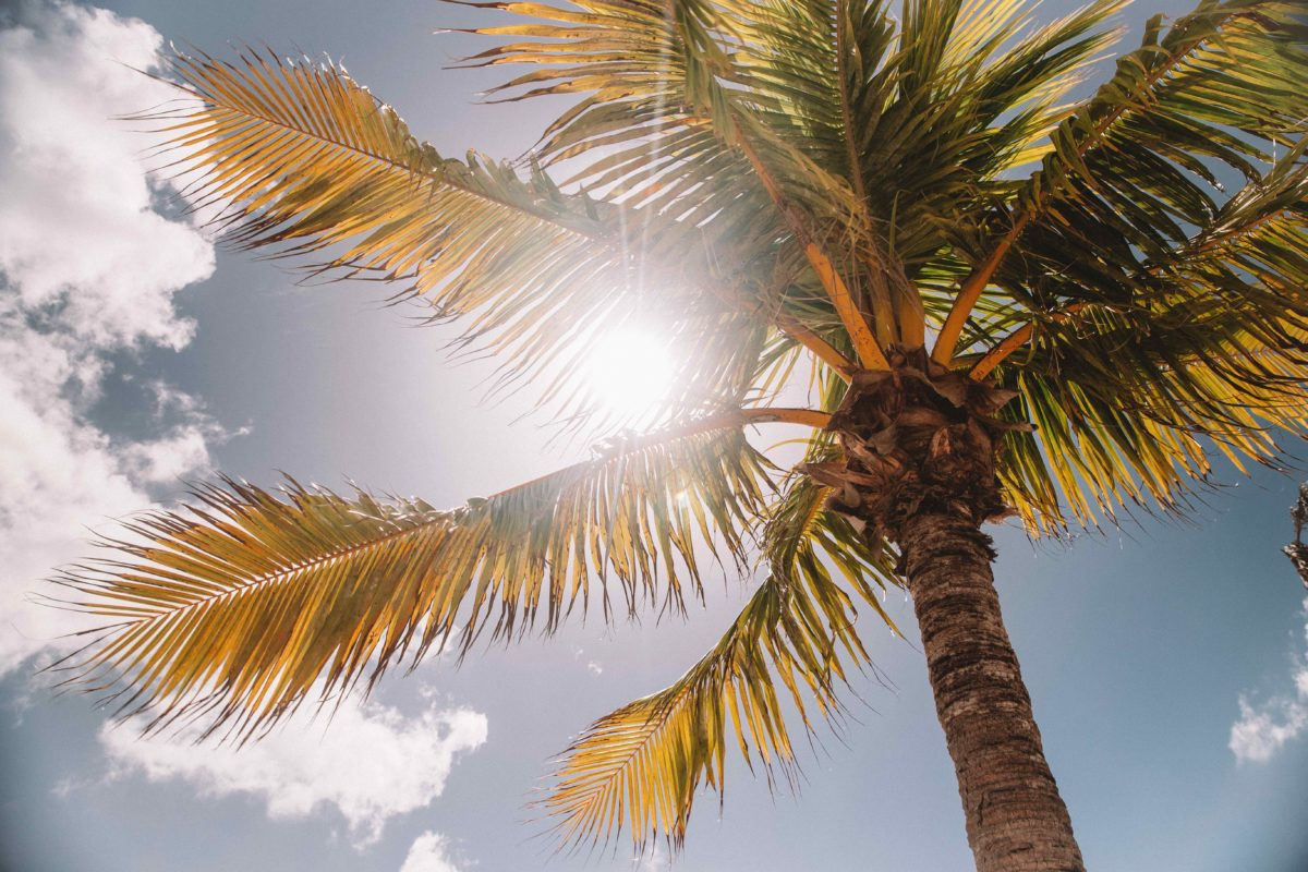 Vitamin D is essential – here's why