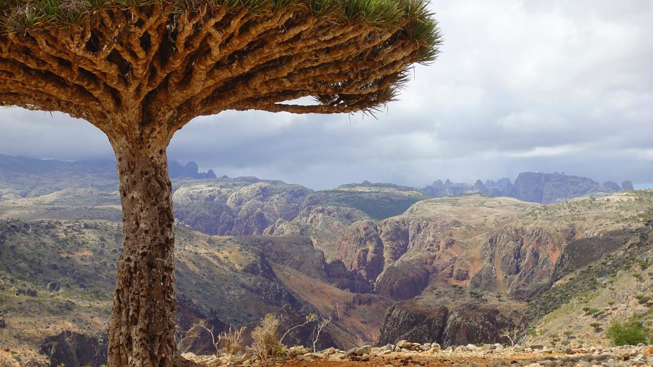 https://livehealthy.ae/wp-content/uploads/2019/09/Socotra-1280x720.jpg