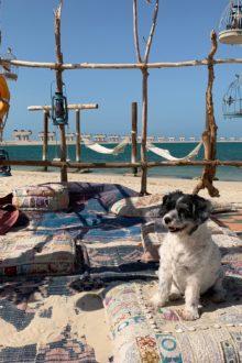 Dubai dogs