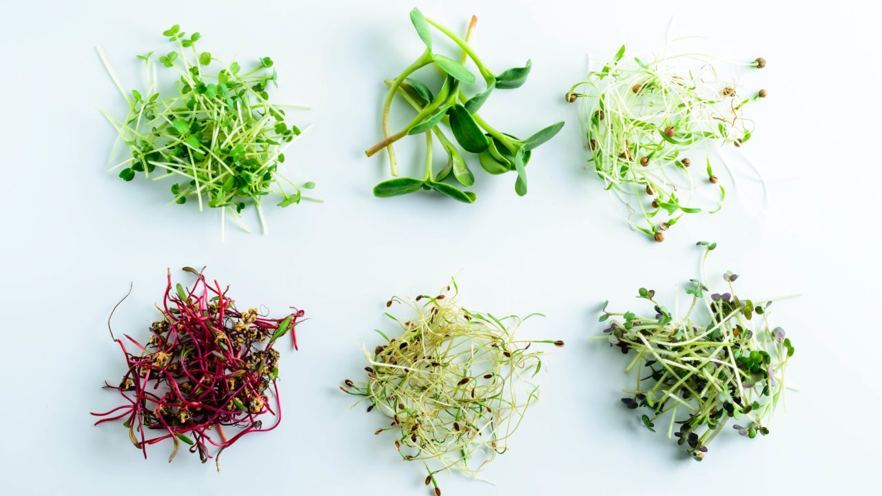 https://livehealthy.ae/wp-content/uploads/2020/04/microgreens-vertical-farming-1280x720.jpg