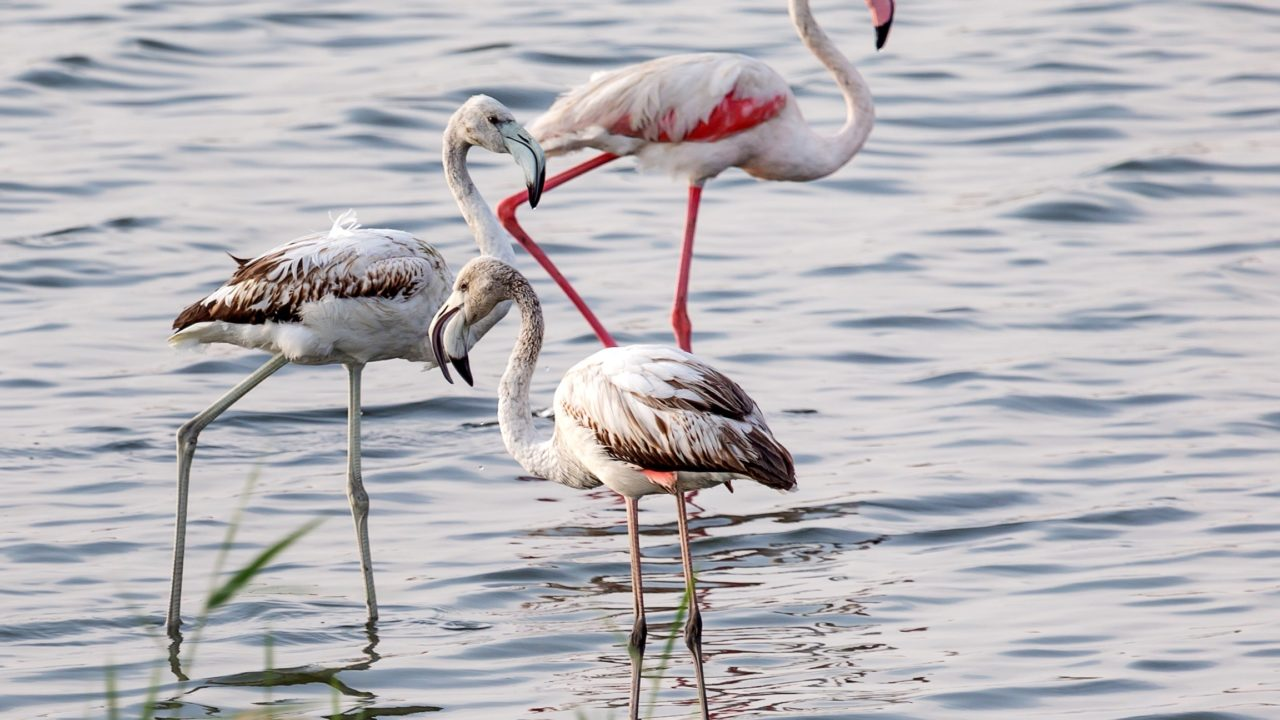 https://livehealthy.ae/wp-content/uploads/2020/06/flamingoes-1280x720.jpg