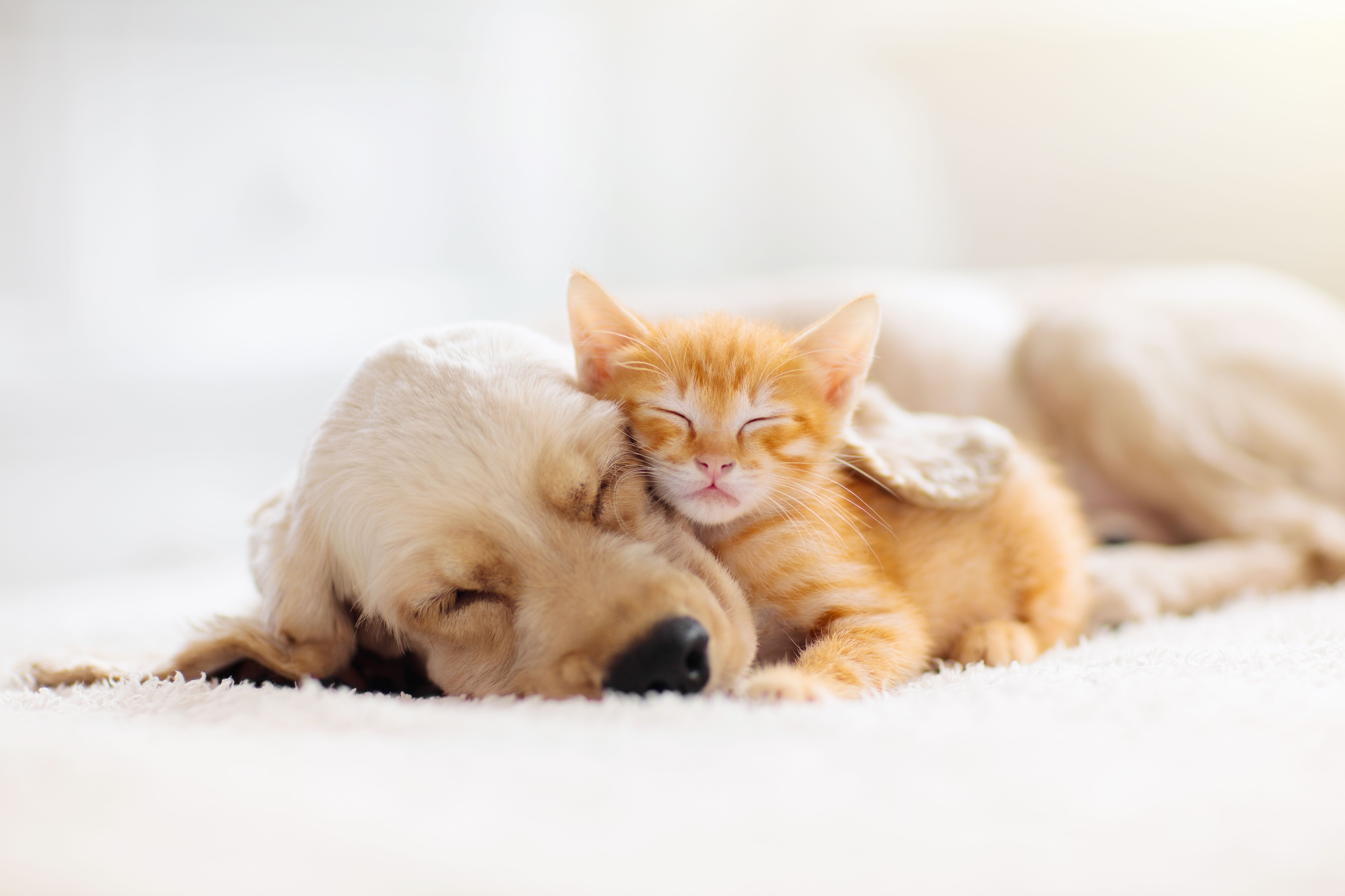 https://livehealthy.ae/wp-content/uploads/2020/08/pets.jpg