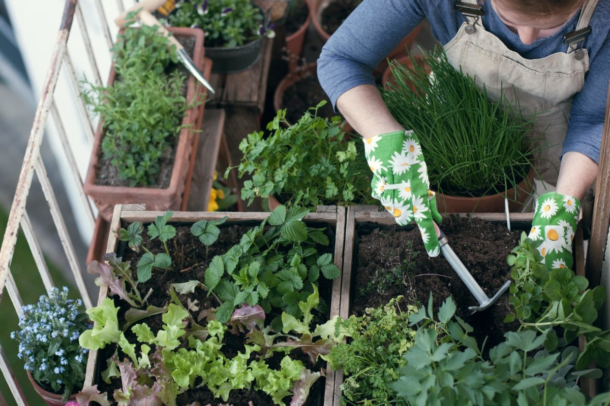 How to get the perfect balcony garden