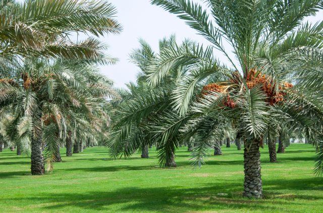 Al Khalidiya Park